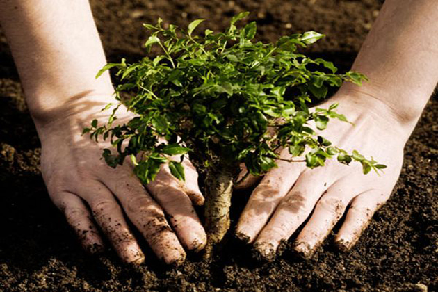 importance of tree plantation Tree plantation for better environment from  the environment of the college lawns was drastically changed in just one day because of tree plantation by.